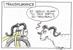 13-Transhumance