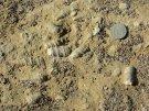 Des fossiles, des tas de fossiles !