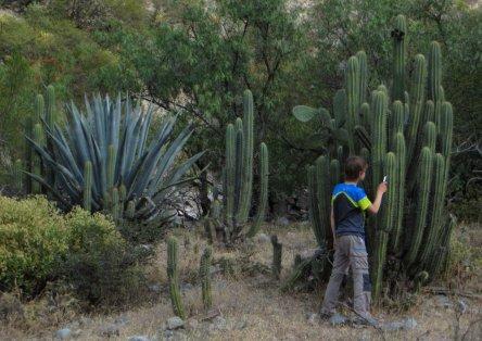 Cactus au bivouac