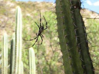 """Araignée """"géante"""", bon on ne voit pas l'échelle sur la photo"""