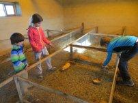 L'élevage de cuys de Juan