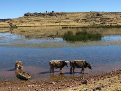 Le lac du site de Sullistani (au fond, les tours funéraires incas)