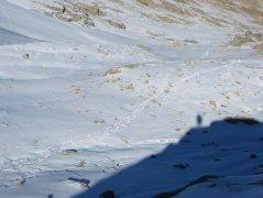 Traces de loups à la queue leu leu