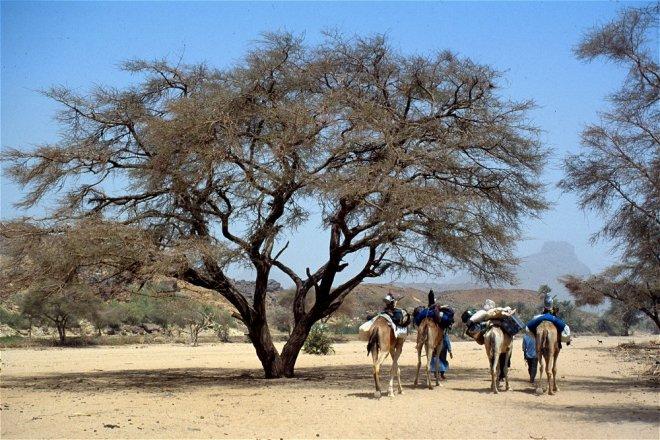arbre_alefes_p