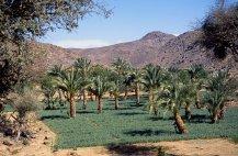 Les Bagzan, le jardin d'Agadez