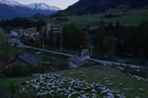 A Termignon, les moutons attendent avec impatience la montée aux alpages !
