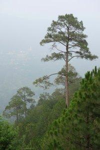 Forêtdecèdres en descendant de Narkanda