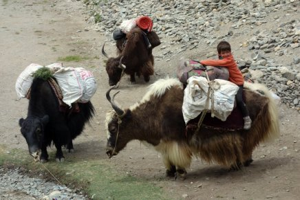 Titouan essaye le yak