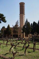 La plus grande tour du vent de Yazd (36 m) et les vignes en premier plan