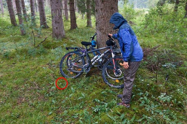 Le nid de guêpes de terre, à côté des vélos : déminage !