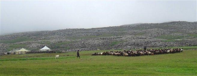 Campement yézidis