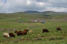Camps de bergers
