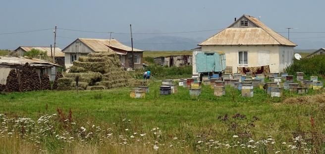 Bouses séchées, foin et ruches, de quoi passer ensuite l'hiver