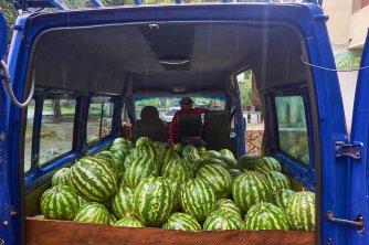 Vendeur de melons bien abrité de la pluie