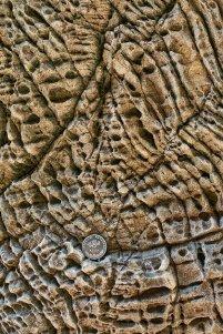Figure d'érosion des rochers de la côte.