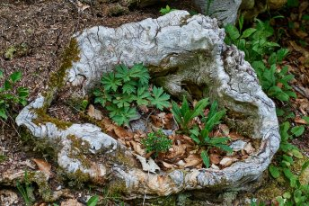 Pot de fleurs forestier